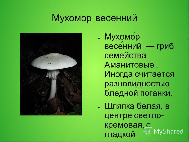 Мухомор весенний Мухомо́р весе́нний гриб семейства Аманитовые. Иногда считается разновидностью бледной проганки. Шляпка белая, в центре светло- кремовая, с гладкой поверхностью, блестящая, достигает в диаметре 3,510 см. У молодых грибов полушаровидна