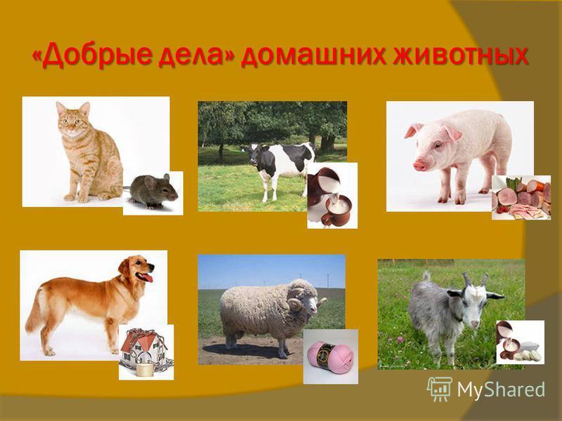 «Добрые дела» домашних животных