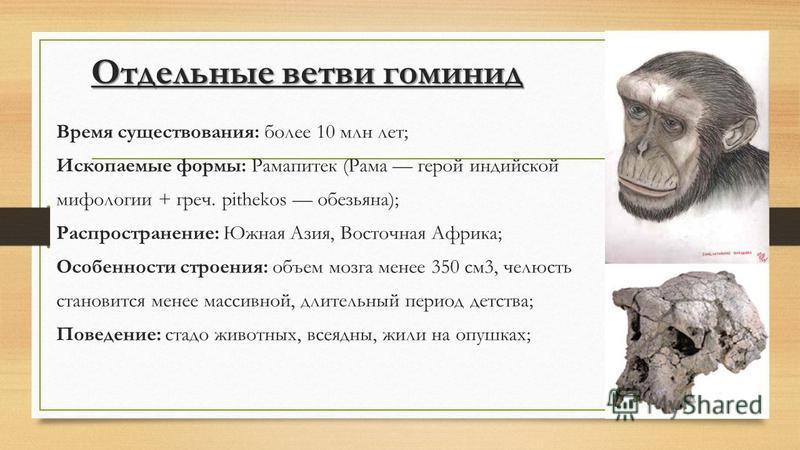 Отдельные ветви гоминид Время существования: более 10 млн лет; Ископаемые формы: Рамапитек (Рама герой индийской мифологии + греч. pithekos обезьяна); Распространение: Южная Азия, Восточная Африка; Особенности строения: объем мозга менее 350 см 3, че