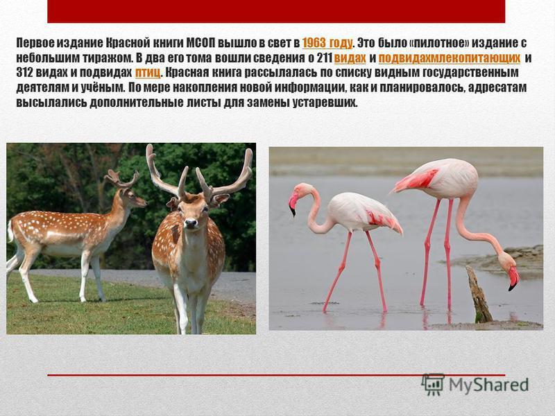 Первое издание Красной книги МСОП вышло в свет в 1963 году. Это было «пилотное» издание с небольшим тиражом. В два его тома вошли сведения о 211 видах и под видах млекопитающих и 312 видах и подвидах птиц. Красная книга рассылалась по списку видным г