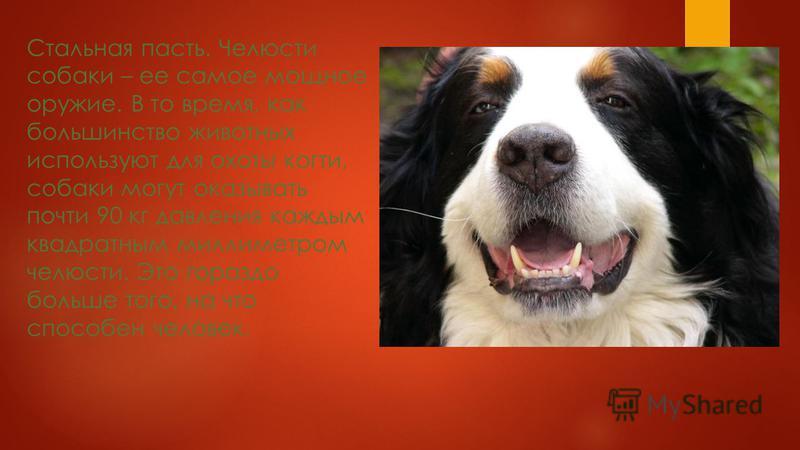 Носовая печать. Каждая собака имеет уникальный отпечаток носа, наравне с человеческими отпечатками пальцев. В прошлом носовые отпечатки использовались для выявления утерянных собак или тех, которые обвинялись в совершении нападения.