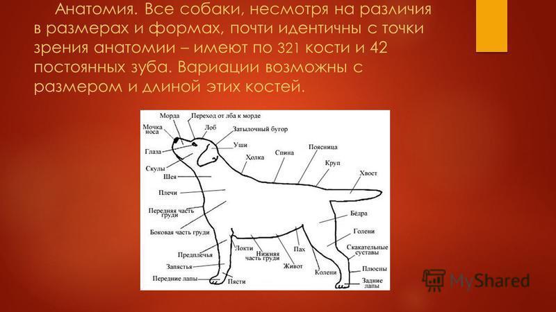 Собаки – удивительные животные. Они умны, обладают веселым нравом. Сегодня мы хотим поведать вам самые интересные факты, связанные с этими верными помощниками людей.