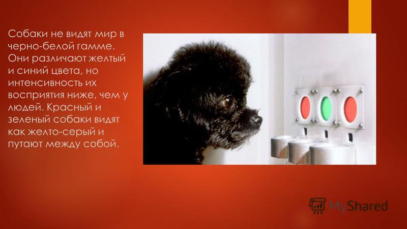 Зрение в темное время суток. Собаки могут видеть в цвете, но в очень ограниченной степени. Кроме того, они в темноте видят гораздо лучше, чем люди, из-за наличия специального слоя в глазах - тапетума. Эта структура играет роль зеркальца и отражает св