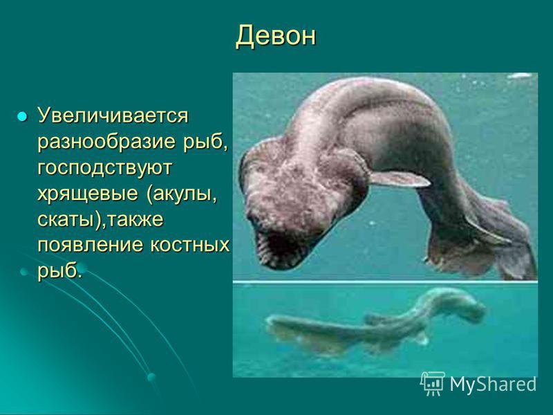 Девон Увеличивается разнообразие рыб, господствуют хрящевые (акулы, скаты),также появление костных рыб. Увеличивается разнообразие рыб, господствуют хрящевые (акулы, скаты),также появление костных рыб.