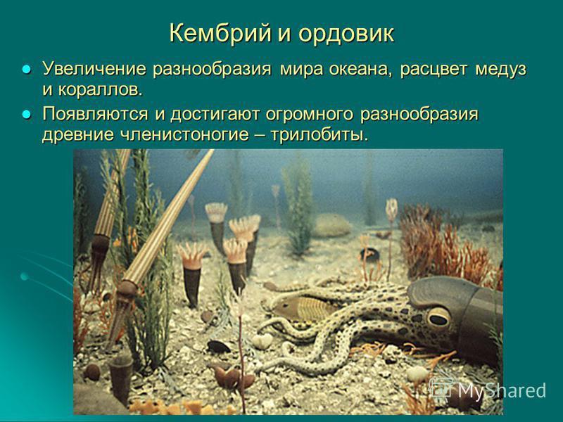 Кембрий и ордовик Увеличение разнообразия мира океана, расцвет медуз и кораллов. Увеличение разнообразия мира океана, расцвет медуз и кораллов. Появляются и достигают огромного разнообразия древние членистоногие – трилобиты. Появляются и достигают ог