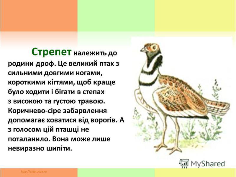 Стрепет належить до родины дроф. Це великий птах з сильными довгими ногами, короткими кігтями, щоб краще було ходите і бігати в степах з високою та густою травою. Коричнево-сіре забарвлення допомагає ховатися від ворогів. А з голосом цій пташці не по