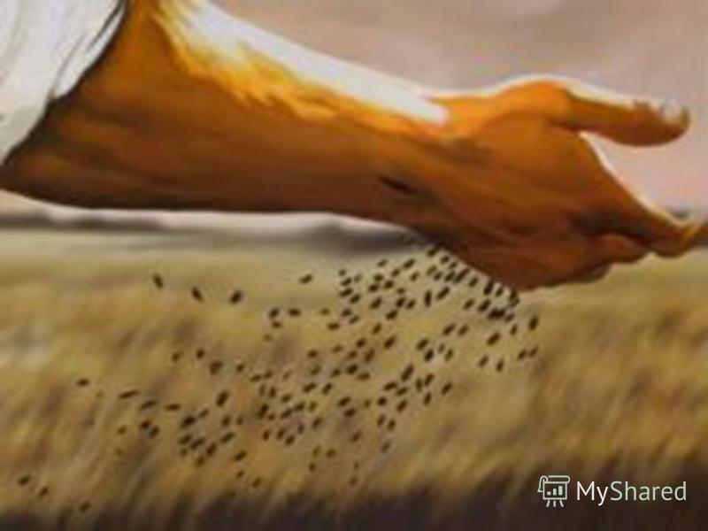 Сьомий вітер в ораницю сіяв сонячну пшеницу…