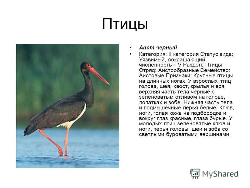 Птицы Отряд: Аистообразные