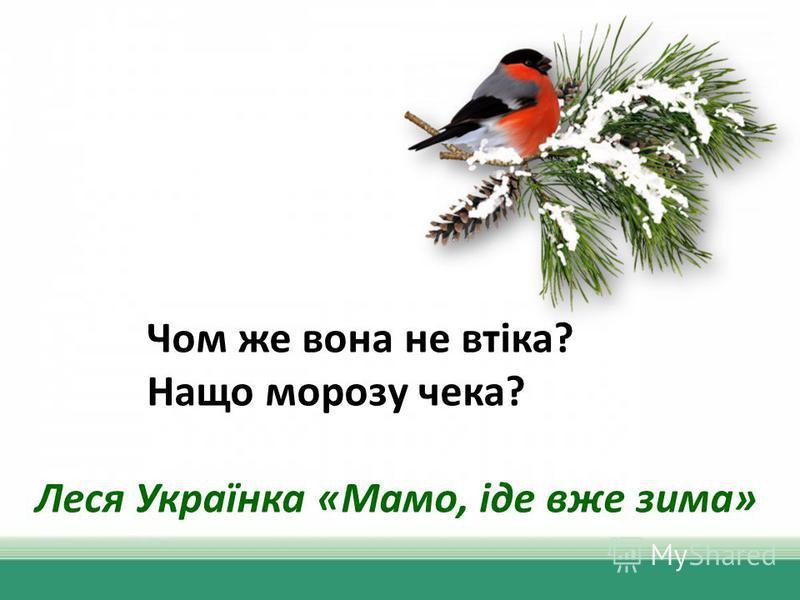 Чом же вона не втіка? Нащо морозу чека? Леся Українка «Мамо, іде вже зима»