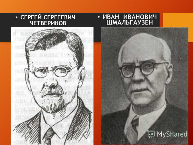 СЕРГЕЙ СЕРГЕЕВИЧ ЧЕТВЕРИКОВ (1882 – 1959) ИВАН ИВАНОВИЧ ШМАЛЬГАУЗЕН (1884 – 1963)