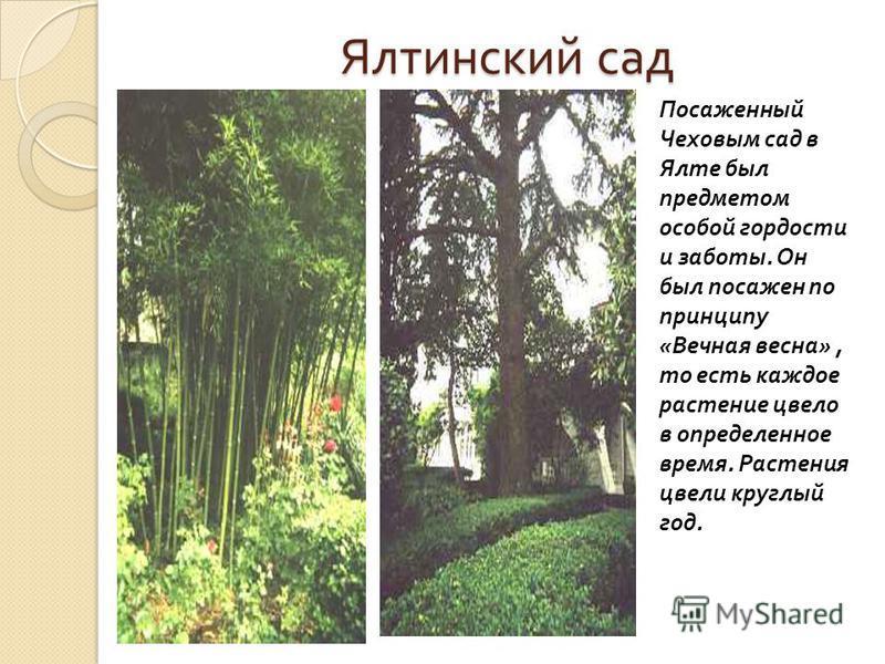 Ялтинский сад Посаженный Чеховым сад в Ялте был предметом особой гордости и заботы. Он был посажен по принципу « Вечная весна », то есть каждое растение цвело в определенное время. Растения цвели круглый год.