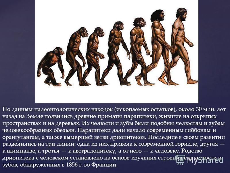 По данным палеонтологических находок (ископаемых остатков), около 30 млн. лет назад на Земле появились древние приматы парапитеки, жившие на открытых пространствах и на деревьях. Их челюсти и зубы были подобны челюстям и зубам человекообразных обезья