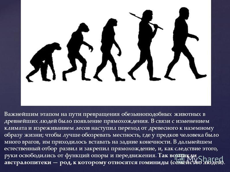 Важнейшим этапом на пути превращения обезьяноподобных животных в древнейших людей было появление прямохождения. В связи с изменением климата и изреживанием лесов наступил переход от древесного к наземному образу жизни; чтобы лучше обозревать местност