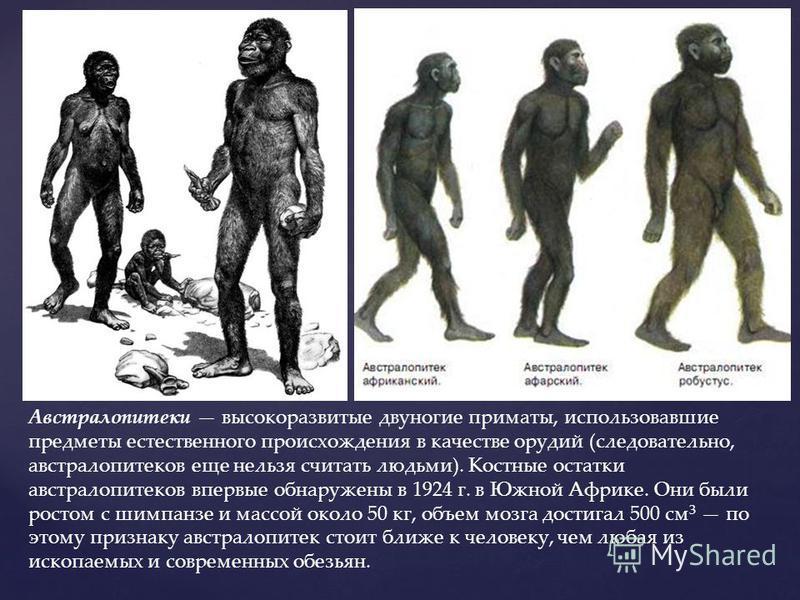 Австралопитеки высокоразвитые двуногие приматы, использовавшие предметы естественного происхождения в качестве орудий (следовательно, австралопитеков еще нельзя считать людьми). Костные остатки австралопитеков впервые обнаружены в 1924 г. в Южной Афр