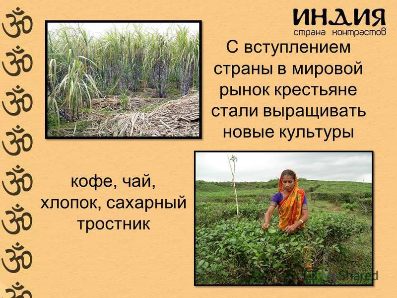 С вступлением страны в мировой рынок крестьяне стали выращивать новые культуры кофе, чай, хлопок, сахарный тростник