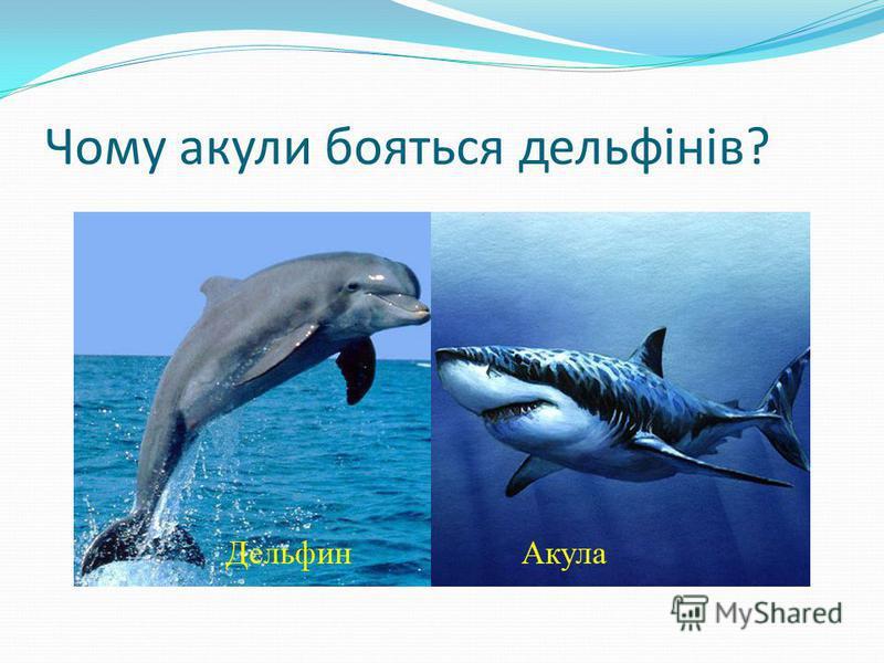 Чому акулы бояться дельфінів?