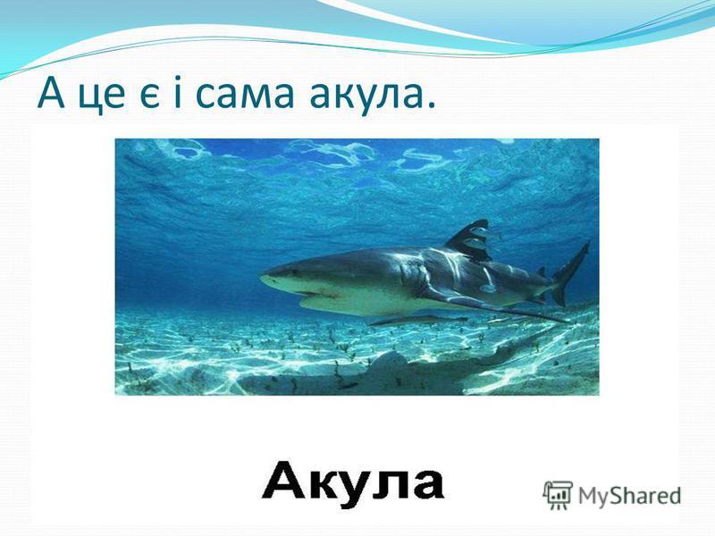 А це є і сама акула.