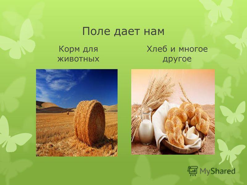 Поле дает нам Корм для животных Хлеб и многое другое