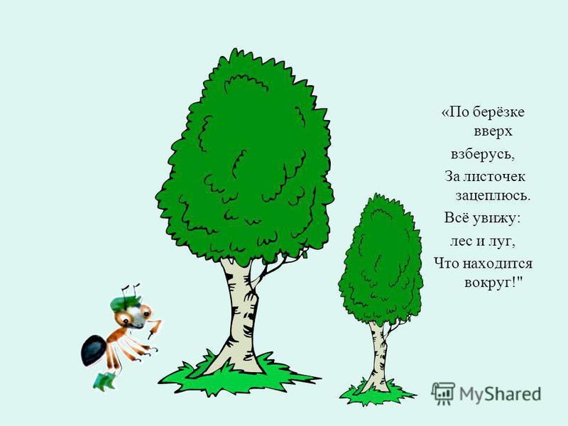 «По берёзке вверх взберусь, За листочек зацеплюсь. Всё увижу: лес и луг, Что находится вокруг!