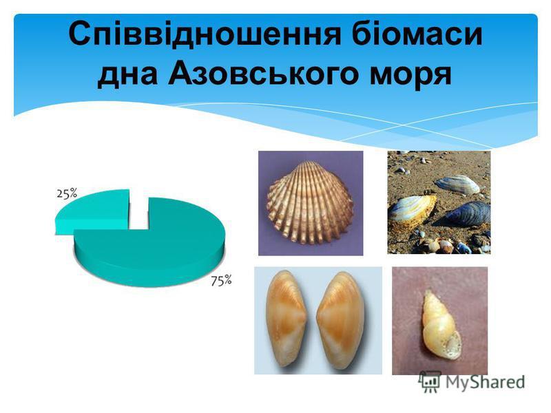 Співвідношення біомаси дна Азовського моря