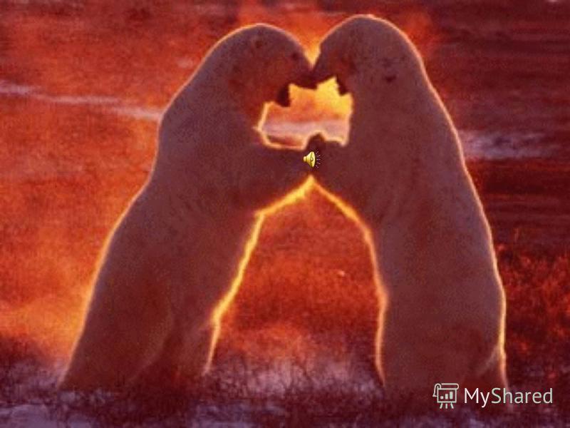 Арктика – царство льда и снега Географическое положение Северный Ледовитый океан, северные моря, острова Освещенность Полярный день и полярная ночь Растительный и животный мир Лишайники, мхи, полярный мак, брусника, морошка, рачки, рыбы, гагарки, бел