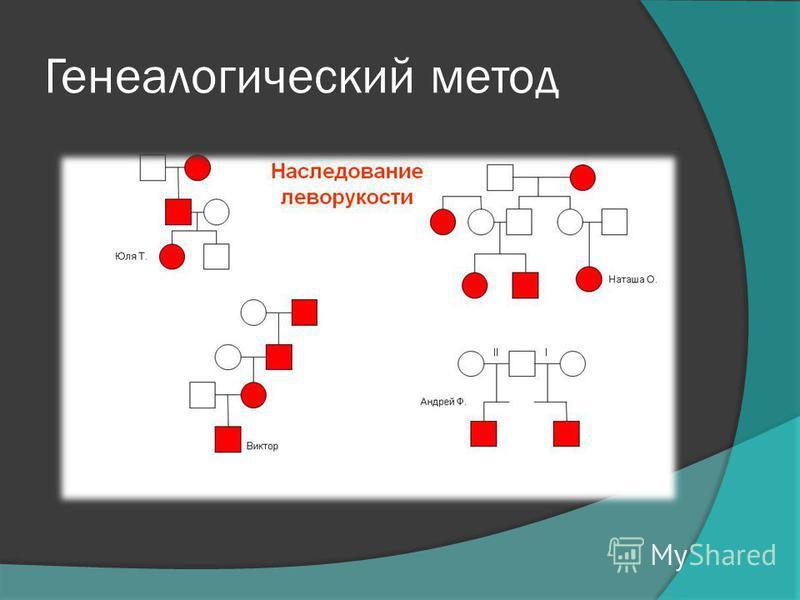 7. Биохимический 2. Цитогенетический 6. Близнецовый 1. Генеологический 5. Метод генетики соматических клеток 3. Дерматоглифический 4.Моделирование(биологическое и математическое) 8.Популяционно- статистическое
