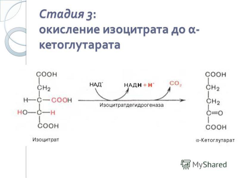Стадия 3: окисление изо цитрата до α - кетоглутарата