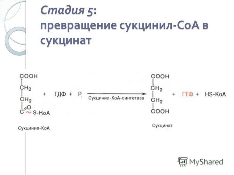 Стадия 5: превращение сукцинил - СоА в сукцинат