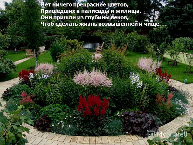Нет ничего прекраснее цветов, Пришедших в палисады и жилища. Они пришли из глубины веков, Чтоб сделать жизнь возвышенней и чище.