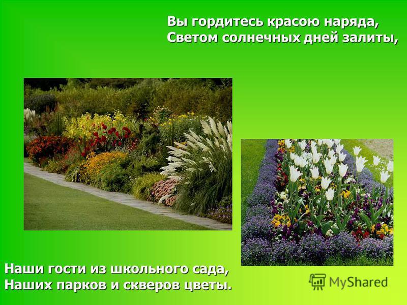 Вы гордитесь красою наряда, Светом солнечных дней залиты, Наши гости из школьного сада, Наших парков и скверов цветы.