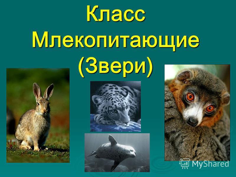Класс Млекопитающие (Звери)