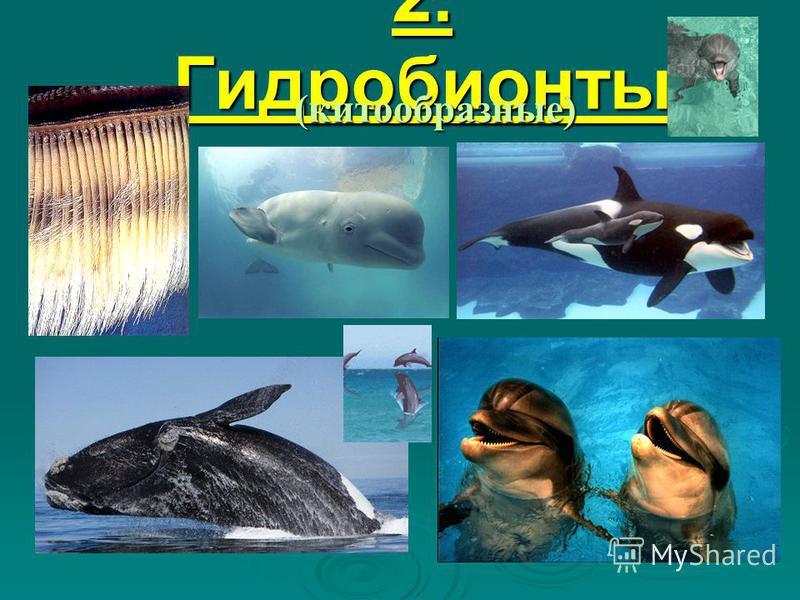 2. Гидробионты (китообразные)