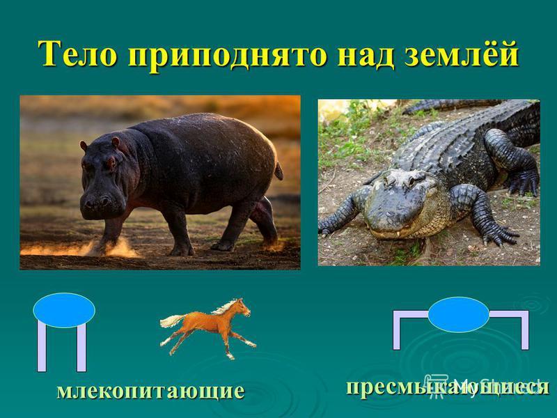 Тело приподнято над землёй млекопитающие пресмыкающиеся