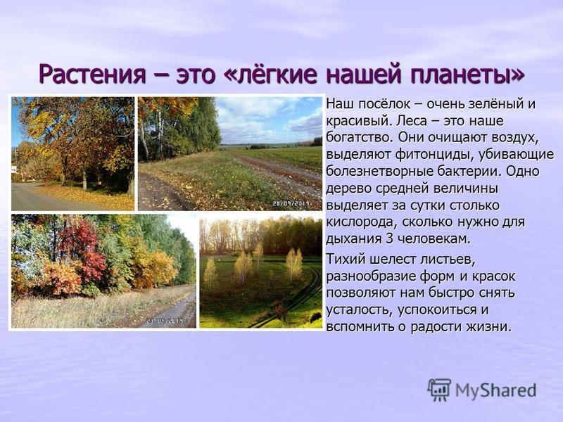 Растения – это «лёгкие нашей планеты» Растения – это «лёгкие нашей планеты» Наш посёлок – очень зелёный и красивый. Леса – это наше богатство. Они очищают воздух, выделяют фитонциды, убивающие болезнетворные бактерии. Одно дерево средней величины выд