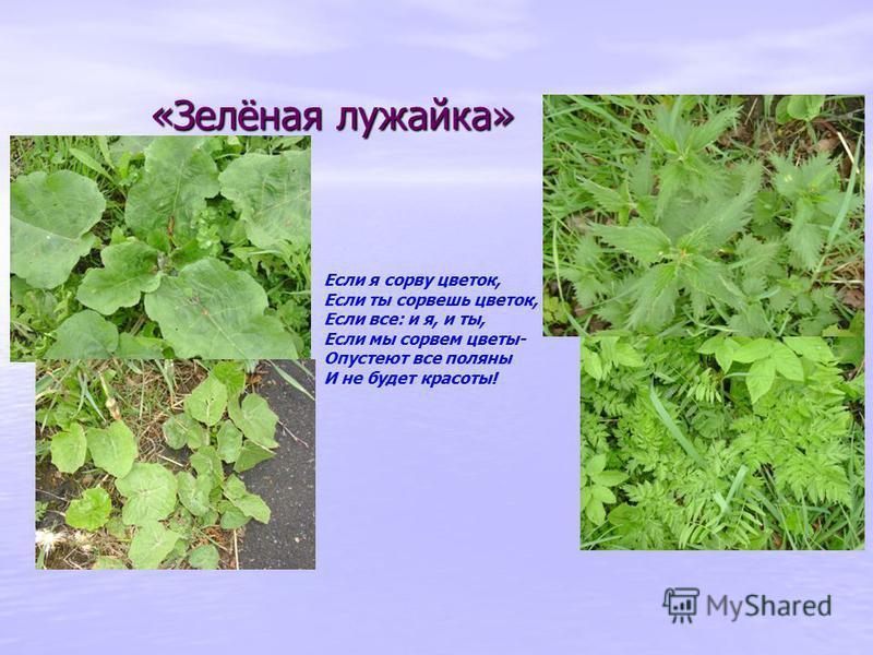 «Зелёная лужайка» Если я сорву цветок, Если ты сорвешь цветок, Если все: и я, и ты, Если мы сорвем цветы- Опустеют все поляны И не будет красоты!