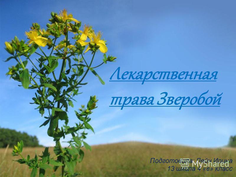 Лекарственная трава Зверобой Подготовила: Лейн Ирина 13 школа 4 «в» класс