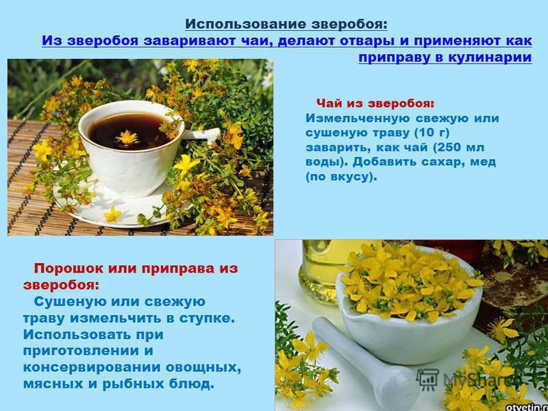 Чай из зверобоя: Измельченную свежую или сушеную траву (10 г) заварить, как чай (250 мл воды). Добавить сахар, мед (по вкусу). Порошок или приправа из зверобоя: Сушеную или свежую траву измельчить в ступке. Использовать при приготовлении и консервиро