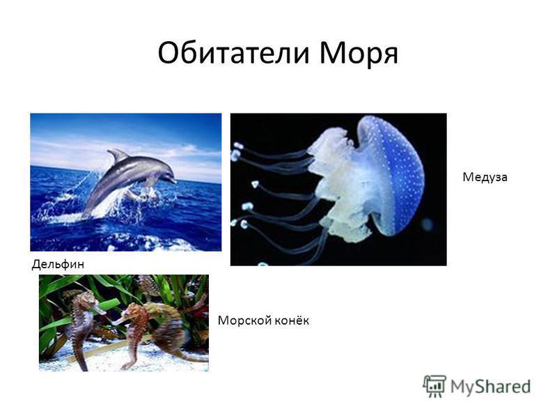 Обитатели Моря Дельфин Медуза Морской конёк