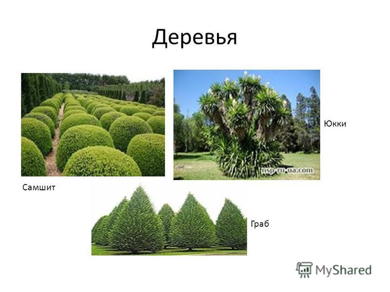 Деревья Самшит Юкки Граб