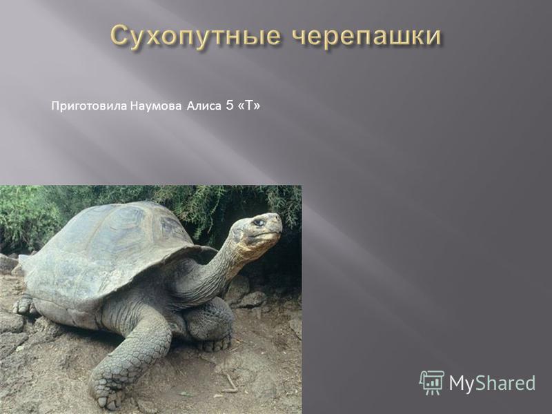 Приготовила Наумова Алиса 5 «Т»