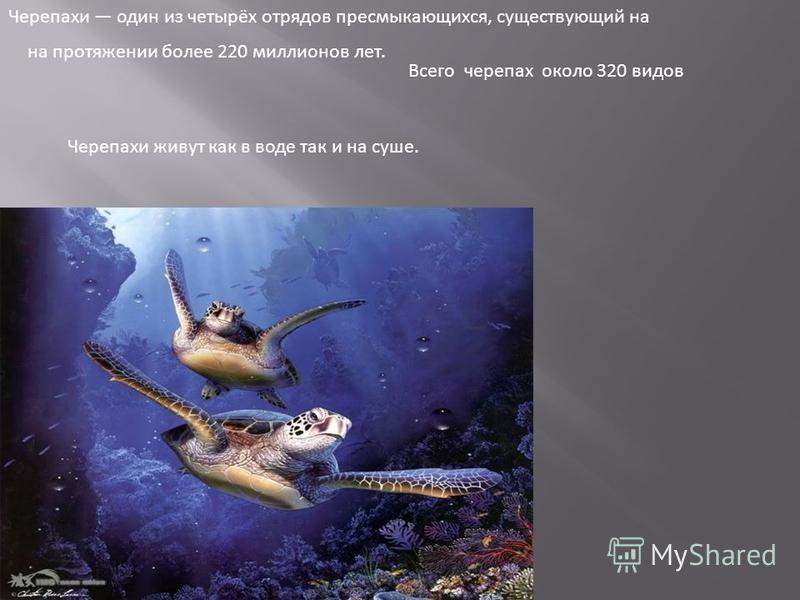 Черепахи один из четырёх отрядов пресмыкающихся, существующий на на протяжении более 220 миллионов лет. Всего черепах около 320 видов Черепахи живут как в воде так и на суше.