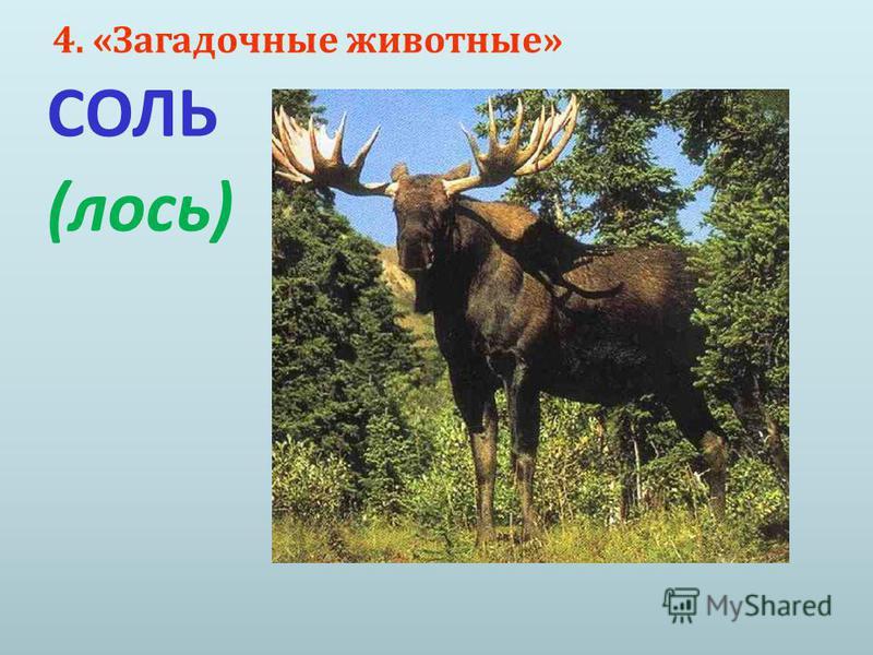 4. « Загадочные животные » СОЛЬ ( лось )