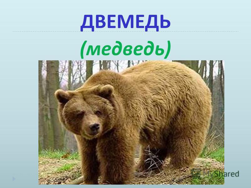 ДВЕМЕДЬ ( медведь )