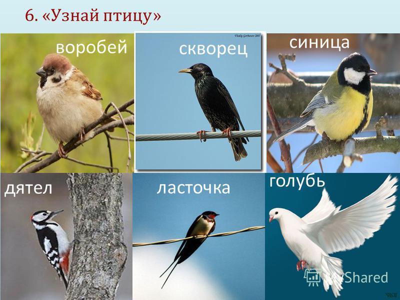 6. « Узнай птицу » воробей скворец синица дятел ласточка голубь