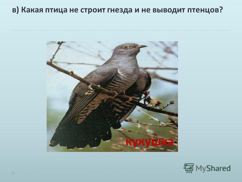 в ) Какая птица не строит гнезда и не выводит птенцов ? кукушка