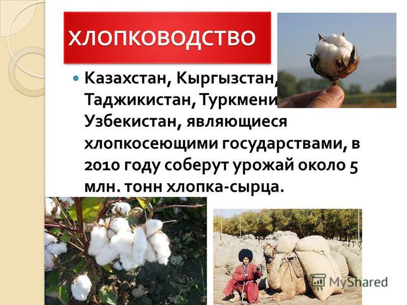 ХЛОПКОВОДСТВОХЛОПКОВОДСТВО Казахстан, Кыргызстан, Таджикистан, Туркменистан и Узбекистан, являющиеся хлопкосеющими государствами, в 2010 году соберут урожай около 5 млн. тонн хлопка - сырца.