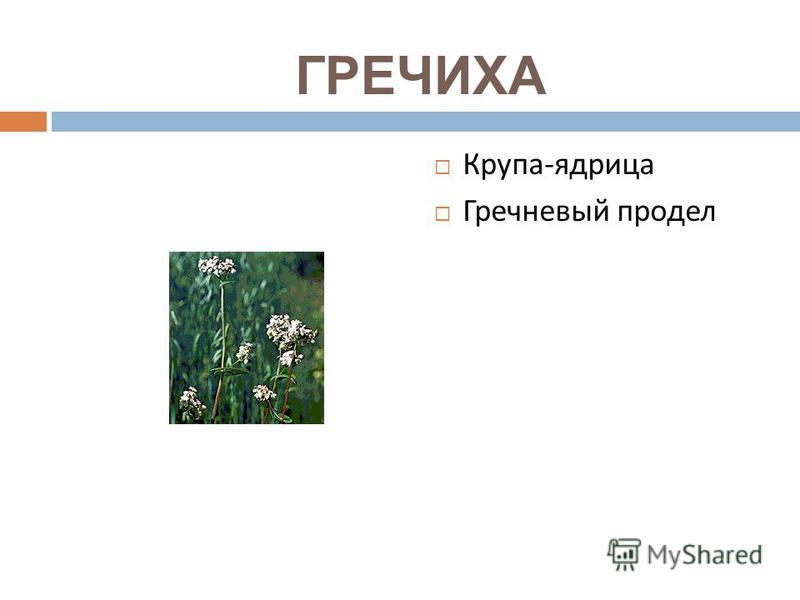 ГРЕЧИХА Крупа - ядрица Гречневый продел