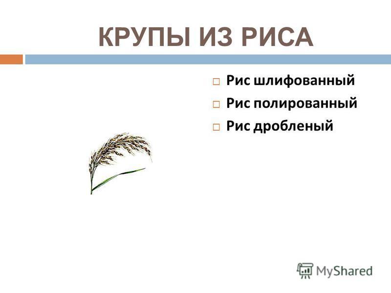 КРУПЫ ИЗ РИСА Рис шлифованный Рис полированный Рис дробленый
