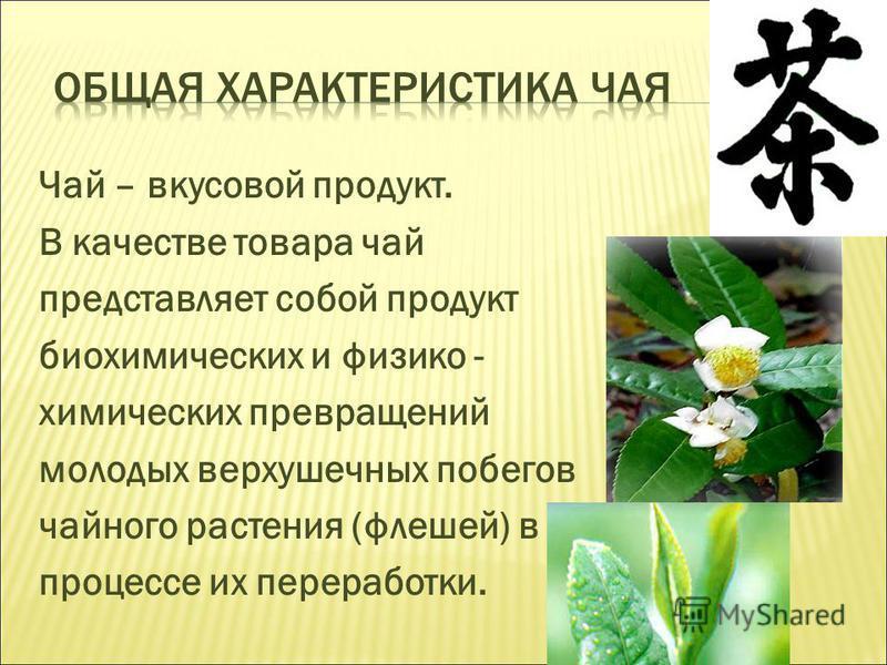 Чай – вкусовой продукт. В качестве товара чай представляет собой продукт биохимических и физико - химических превращений молодых верхушечных побегов чайного растения (флешей) в процессе их переработки.