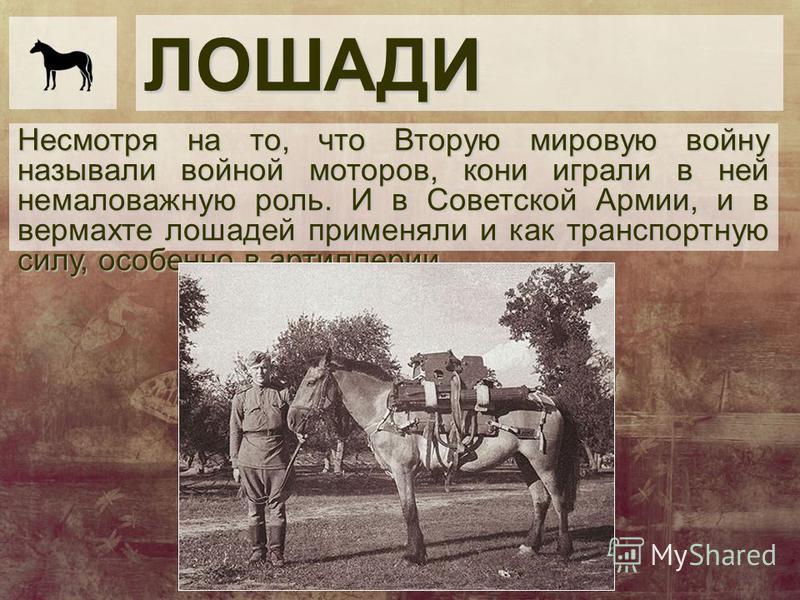 ЛОШАДИ Несмотря на то, что Вторую мировую войну называли войной моторов, кони играли в ней немаловажную роль. И в Советской Армии, и в вермахте лошадей применяли и как транспортную силу, особенно в артиллерии.